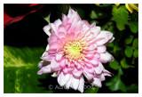 Flower_0211.jpg