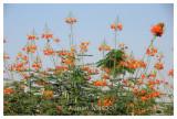 Flower_0411.jpg