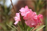 Flower_1101.jpg