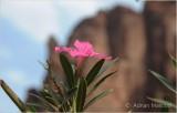 Flower_1102.JPG