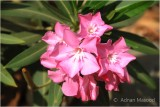 Flower_1103.JPG