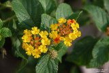 Flower-005.jpg