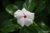 Flower-007.JPG
