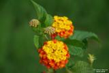 Flower-009.JPG