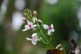 Flower-010.JPG