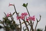 Flower-011.JPG