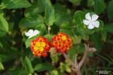 Flower-012.JPG