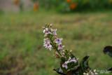 Flower-013.JPG