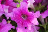 Flower-014.JPG