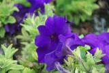 Flower-015.JPG