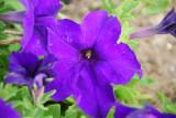 Flower-017.JPG