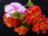 Flower-018.JPG