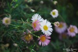 Flower-019.JPG