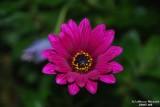 Flower-020.JPG