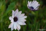 Flower-021.JPG