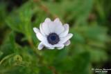 Flower-023.JPG