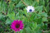 Flower-024.JPG