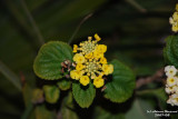 Flower-025.JPG
