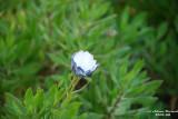 Flower-027.JPG