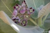 Flower-029.JPG
