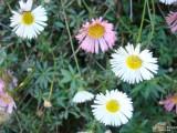 Flower-031.JPG