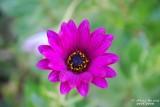 Flower-033.JPG