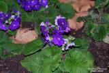 Flower-034.JPG