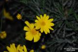 Flower-035.JPG