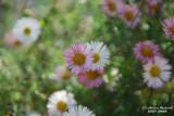 Flower-036.JPG