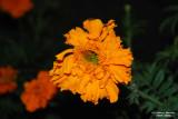Flower-037.JPG