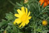 Flower-041.JPG