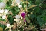 Flower-044.JPG