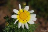 Flower-046.JPG