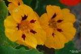 Flower-048.JPG