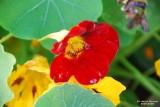 Flower-051.JPG