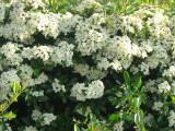 Flower-052.JPG