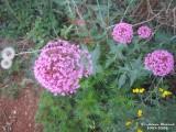 Flower-053.JPG