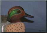 Sarcelle d'hiver ( Green-winged Teal )