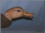 Canard noir ( Black duck )