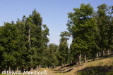 Tamentout Forest (Petite Kabylie)_A8T0090.jpg