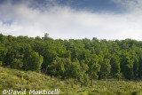 Tamentout Forest (Petite Kabylie)_A8T0406.jpg