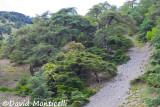 Atlantic Cedar (Djebel Babor)_A8T0327.jpg