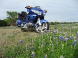 BlueInBlue 004a.JPG