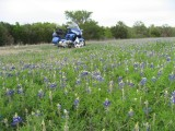 BlueInBlue 022a.JPG