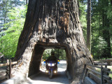 Big Trees at end of Hwy 1