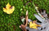 Moss & Leaves