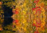 Foliage a.jpg