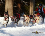 2011 Myopia Sled Dog 8 Mile Race