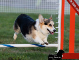 Pioneer Valley Kennel Club AKC Agility Trial 2012