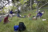 Plant collecting in the San Juans